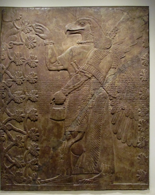 A bas relief in the Louvre.  In this case the bird-apkallū tends to a sacred tree. Considering the mullilu in his right hand and the banduddu in his left, (tree cone and water bucket), he is engaged in a water ritual intended to sanctify the sacred tree. This is a common motif in Sumerian and Neo-Assyrian idols.  This bas relief is in the Louvre.  Primary publicationNimrud NW Palace I-24 = RIMA 2.0.101.023, ex. 189 (f) Collection	Nimrud, Iraq (a); British Museum, London, UK (b); Louvre Museum, Paris, France (c); Nimrud, Iraq (d); Detroit Institute of Arts, Detroit, Michigan, USA (e); British Museum, London, UK; Louvre Museum, Paris, France  Museum no.	Nimrud fragment no. 42 (a); BM 098061 (b); AO 22198 (c); Nimrud fragment no. 43 and 45 (d); DIA 47.181 (e) (photo: DIA); AO 19849  Accession no.	1903-10-10, 0002 (b) Provenience	Kalhu (mod. Nimrud) Period	Neo-Assyrian (ca. 911-612 BC)