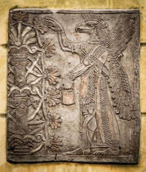 "In Neo-Assyrian art these bird-headed ""genies,"" as they were long described, are now known to be apkallū, ""bird-apkallū,"" in this case, mixed-feature exorcists and creatures of protection created by the god Ea. They traditionally served as advisors to kings. Their association with sacred trees, as they are often portrayed, remains somewhat perplexing.  This apkallū makes the iconic gesture of exorcism and liberation of sin with the mullilu cone in his raised right hand, and the banduddu water bucket in his left hand.  There are three known types of apkallū: the human, with wings; the avian-headed, with wings, and the fish-apkallū, with carp skin draped over their heads.  https://www.flickr.com/photos/lanpernas2/8606000868/"