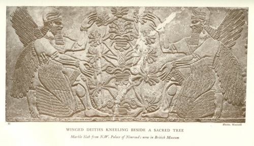 Postdiluvian advisors to kings who were men, the ummianu, were the successors of the antediluvian mixed-species Apkallu who were portrayed as fish-men. In this frieze now held in the British Museum they tend to a tree of life or a tree of knowledge. The antediluvian Apkallu were the so-called seven sages of Sumeria.