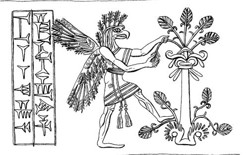 Apkallu type 3, illustration 75, Stephanie Dalley, IDD.<br /> This illustration, number 75, is unique in portraying a type 3 avian-headed apkallu harvesting a leaf or a cone from the sacred tree.<br /> The apkallu goes so far as to plant his left leg against the tree for leverage.<br /> This bird-apkallu is significant for his lone curl at the forehead, and for the emphasis placed on the tassels of his garment.<br /> It should also be observed that this portrayal of the sacred tree depicts leaves, which is unusual.<br /> I also cannot escape the nagging impression that the tree appears to blossom from a vase, with symbology evocative of the fleur-de-lis.