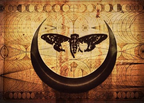 Cicada Lestat Lunar Horns July 4 2019